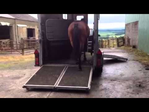 Carting-Horses-The-Lorry-Or-The-Trailer