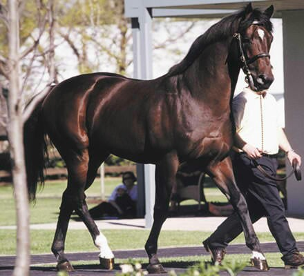 Fusaichi Pegasus - Most Expensive Horse