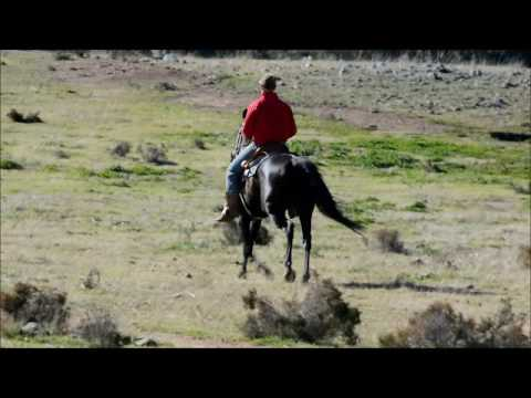 Top-5-Horse-Breeds-For-Trail-Riding